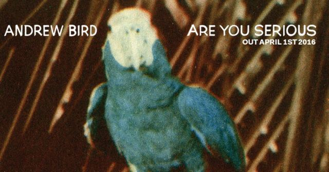 andrew bird are you serious
